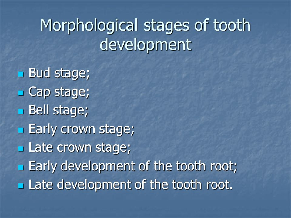Morphological stages of tooth development