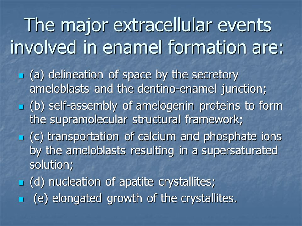 The major extracellular events involved in enamel formation are: