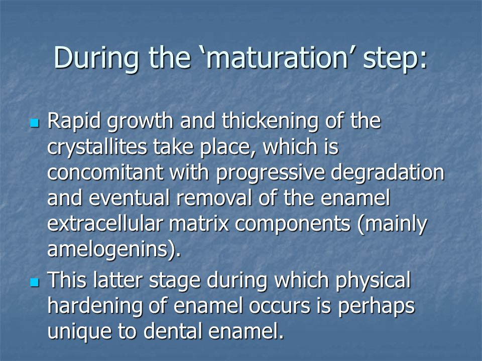 During the 'maturation' step: