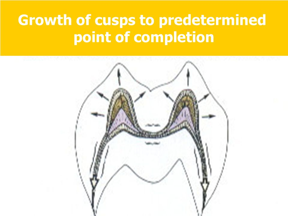 Growth of cusps to predetermined