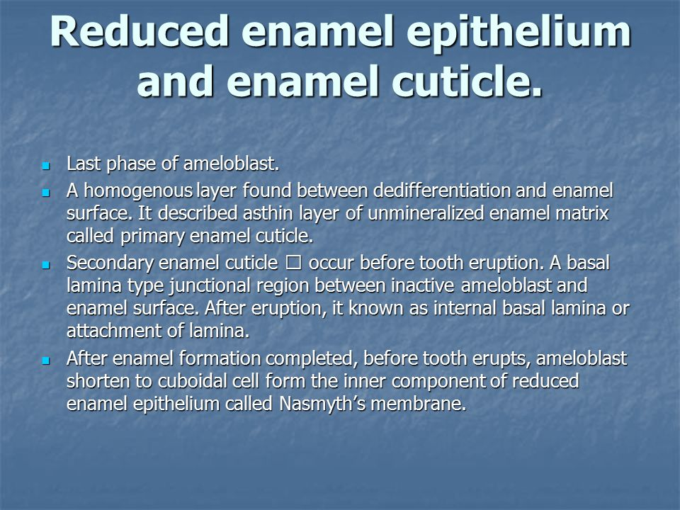 Reduced enamel epithelium and enamel cuticle.