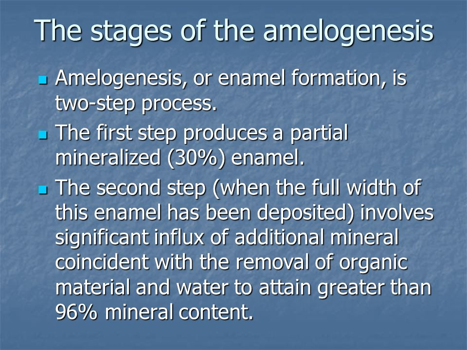 The stages of the amelogenesis