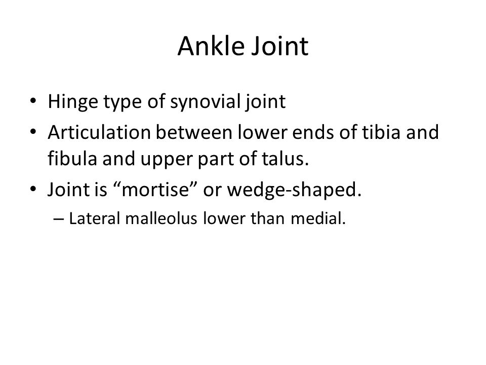 Ankle Joint Hinge type of synovial joint
