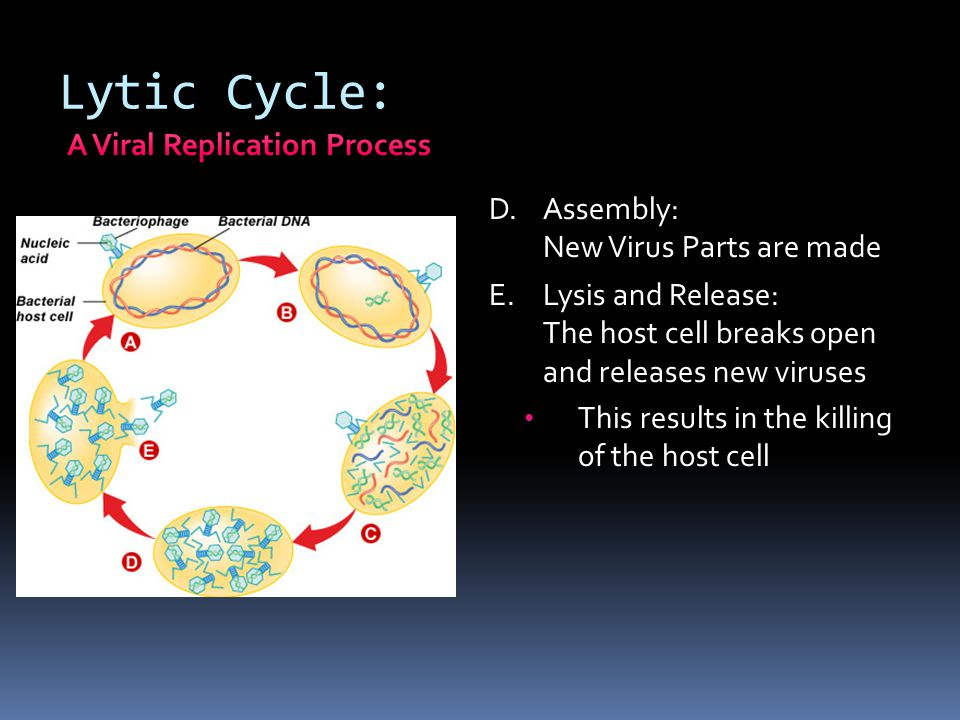 A Viral Replication Process