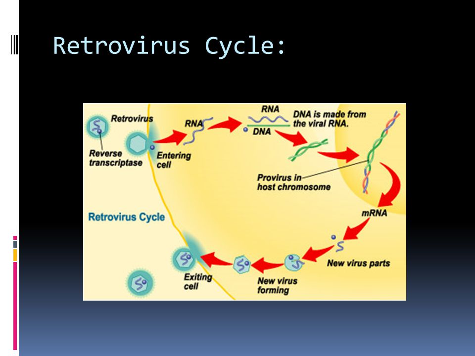 Retrovirus Cycle: