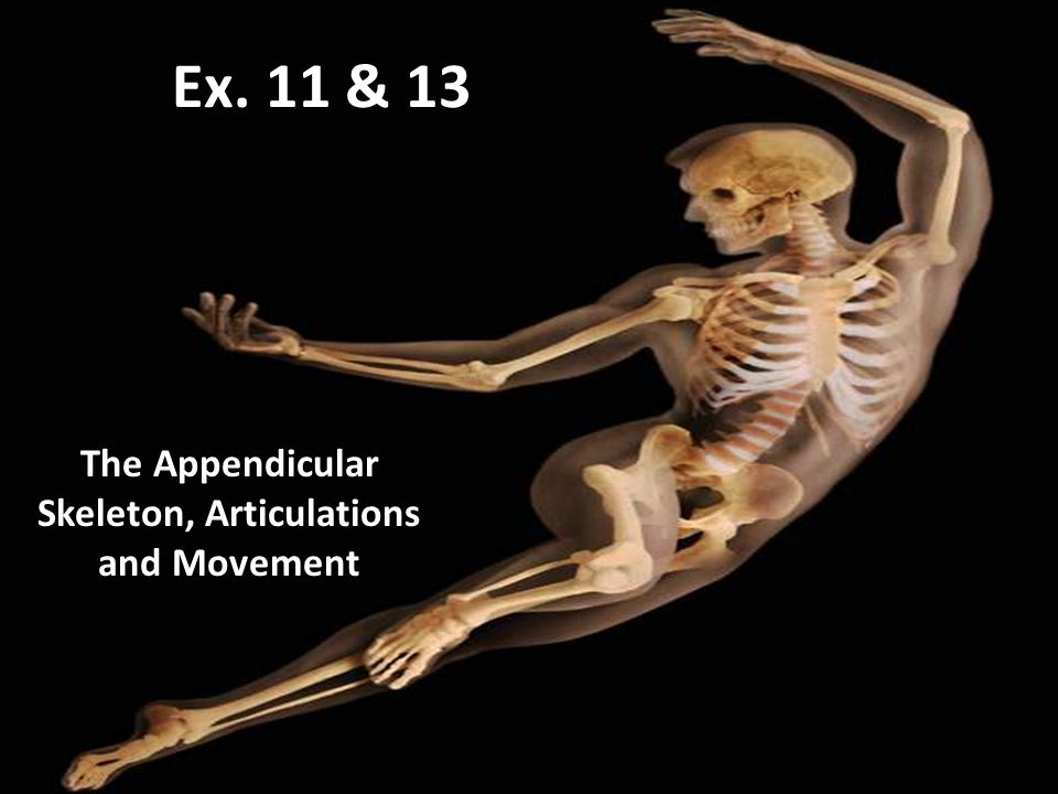The Appendicular Skeleton, Articulations and Movement