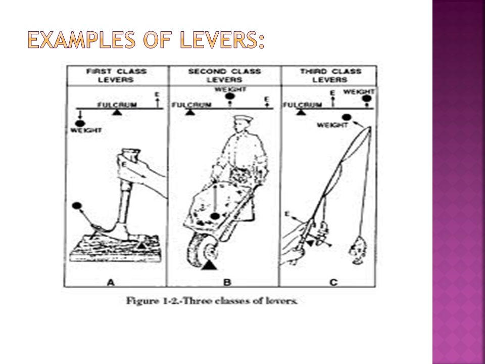 The Simple Machines Screw Wedge Inclined Plane Pulley Wheel and – Types of Levers Worksheet