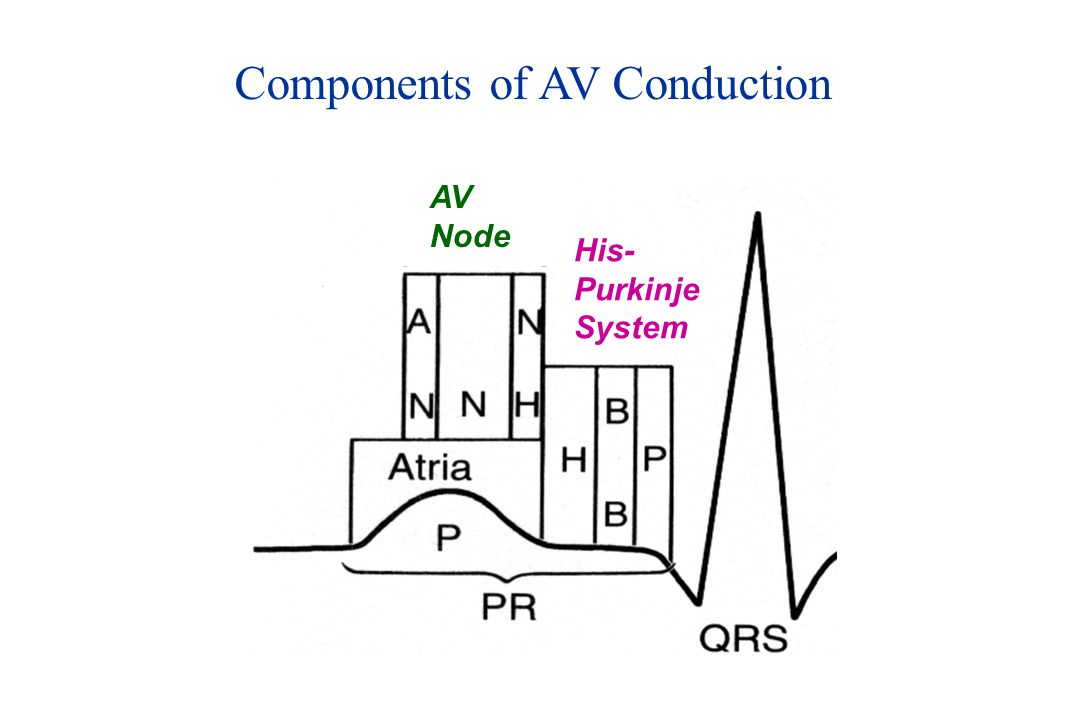 Components of AV Conduction