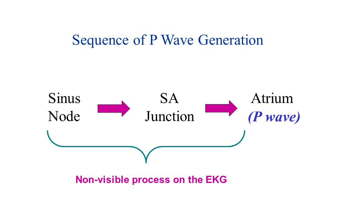 Sequence of P Wave Generation