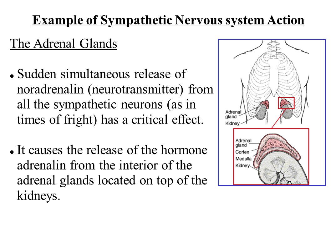 Example of Sympathetic Nervous system Action