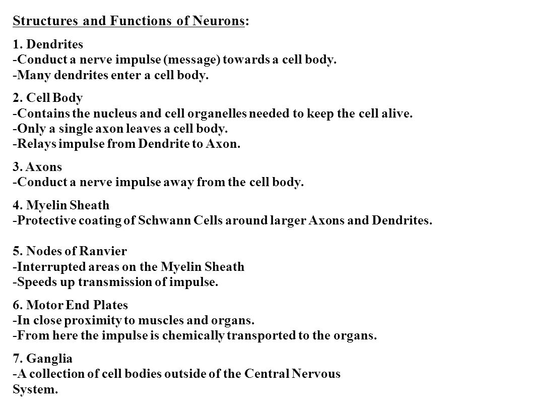 Structures and Functions of Neurons: