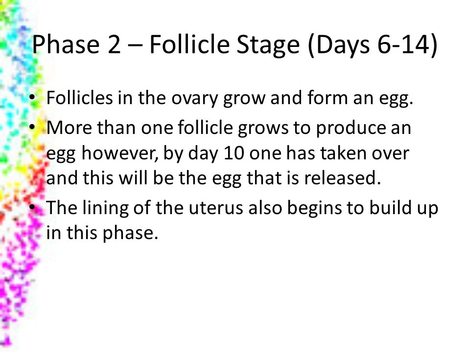 Phase 2 – Follicle Stage (Days 6-14)