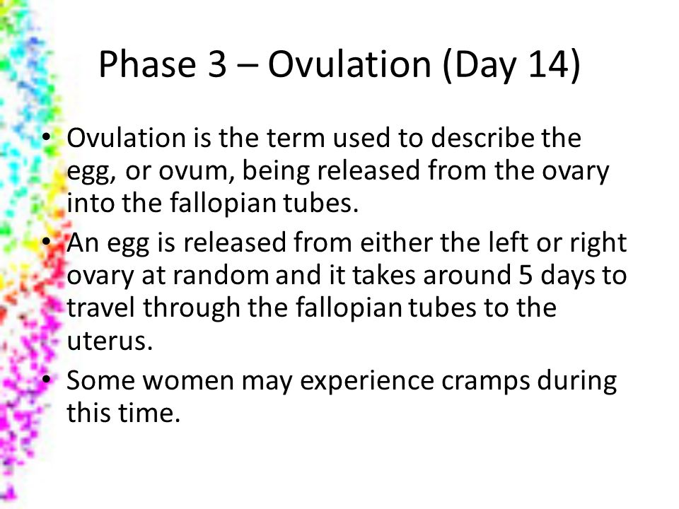 Phase 3 – Ovulation (Day 14)
