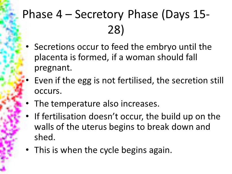 Phase 4 – Secretory Phase (Days 15-28)