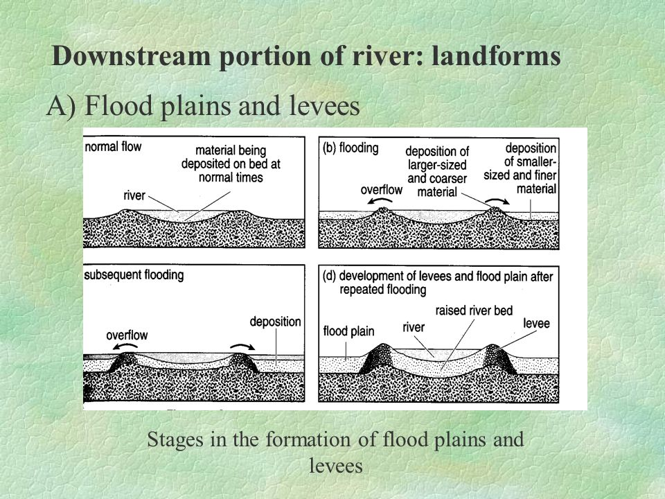 Stages in the formation of flood plains and levees