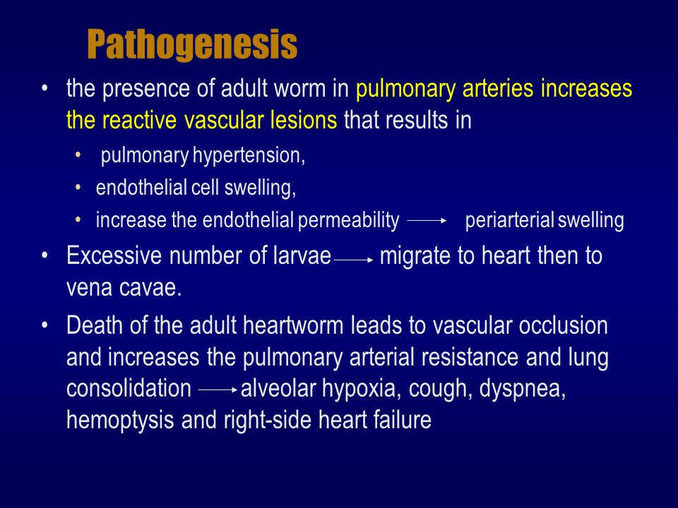 Pathogenesis the presence of adult worm in pulmonary arteries increases the reactive vascular lesions that results in.