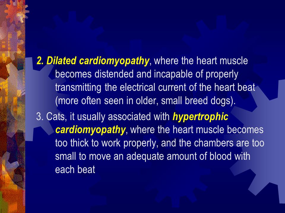 2. Dilated cardiomyopathy, where the heart muscle becomes distended and incapable of properly transmitting the electrical current of the heart beat (more often seen in older, small breed dogs).