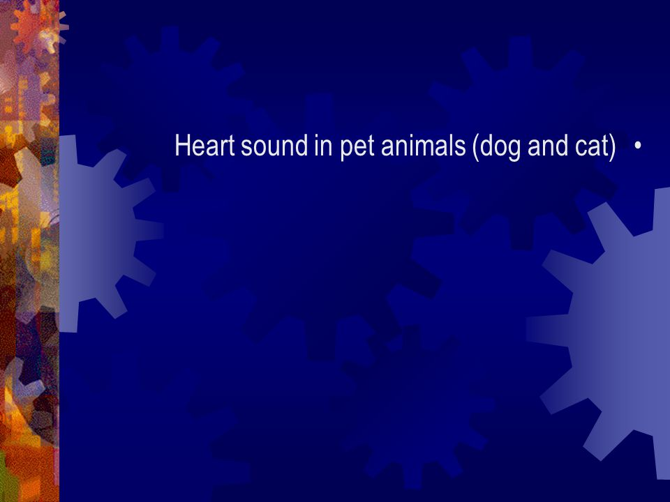Heart sound in pet animals (dog and cat)