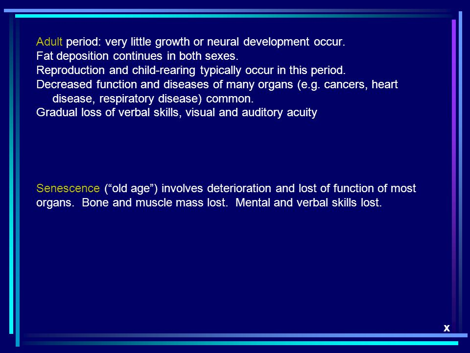 Adult period: very little growth or neural development occur