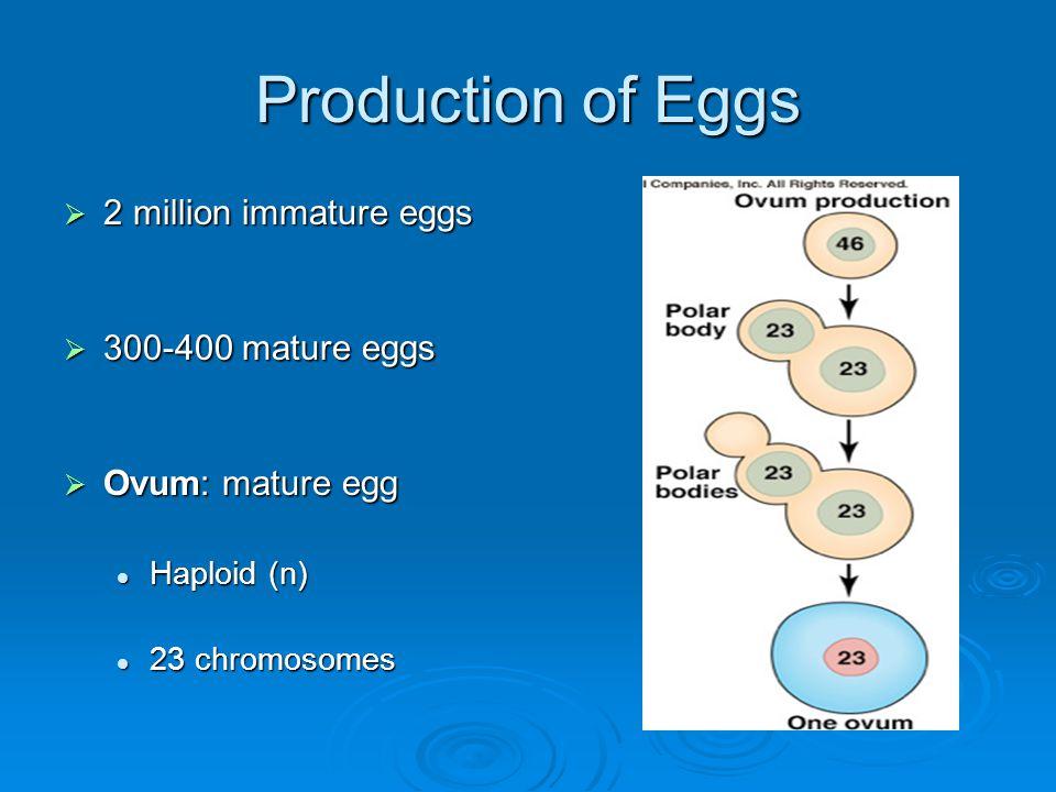 Production of Eggs 2 million immature eggs 300-400 mature eggs