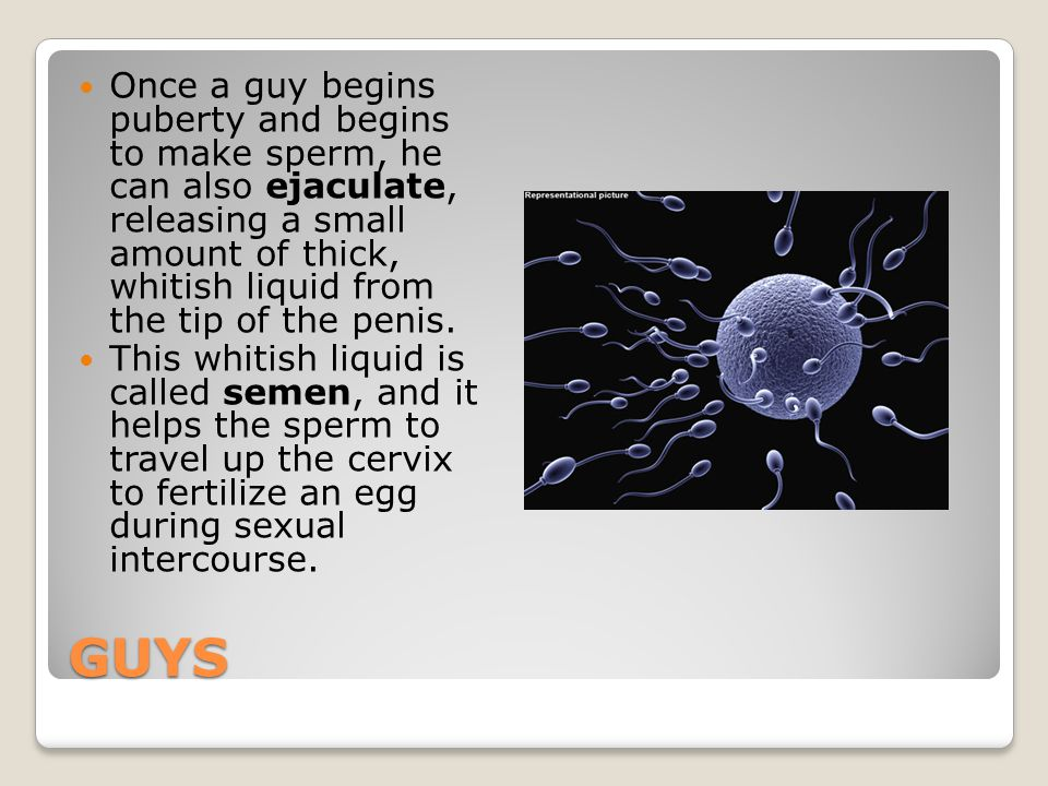 Once a guy begins puberty and begins to make sperm, he can also ejaculate, releasing a small amount of thick, whitish liquid from the tip of the penis.