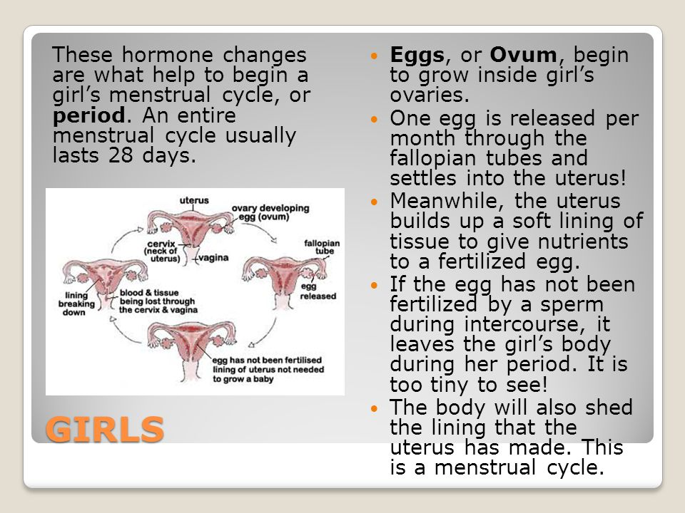 These hormone changes are what help to begin a girl's menstrual cycle, or period. An entire menstrual cycle usually lasts 28 days.