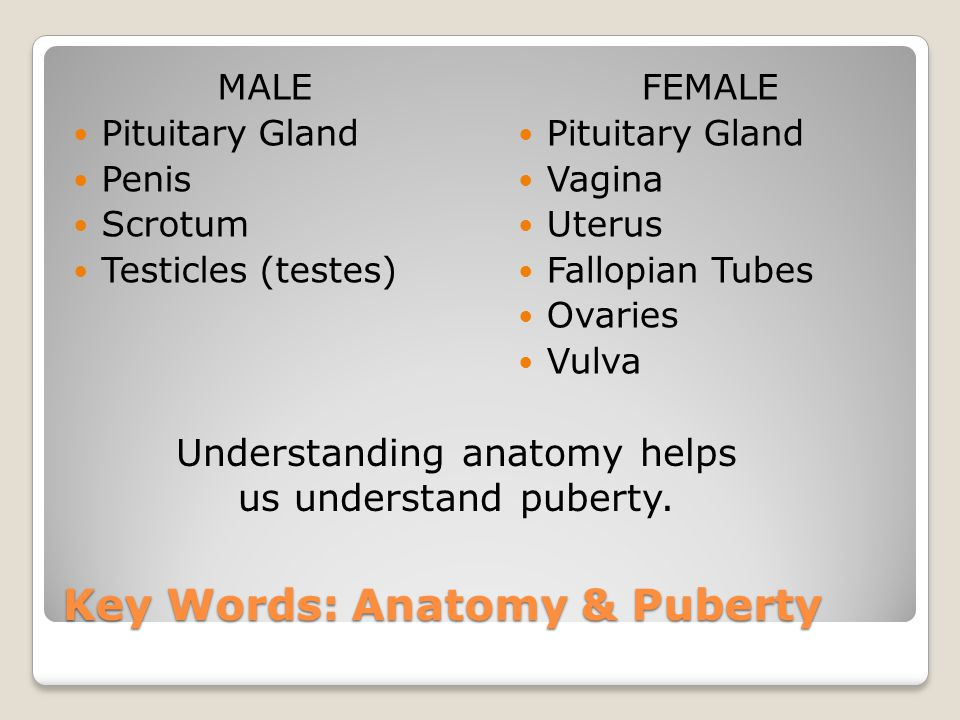 Key Words: Anatomy & Puberty