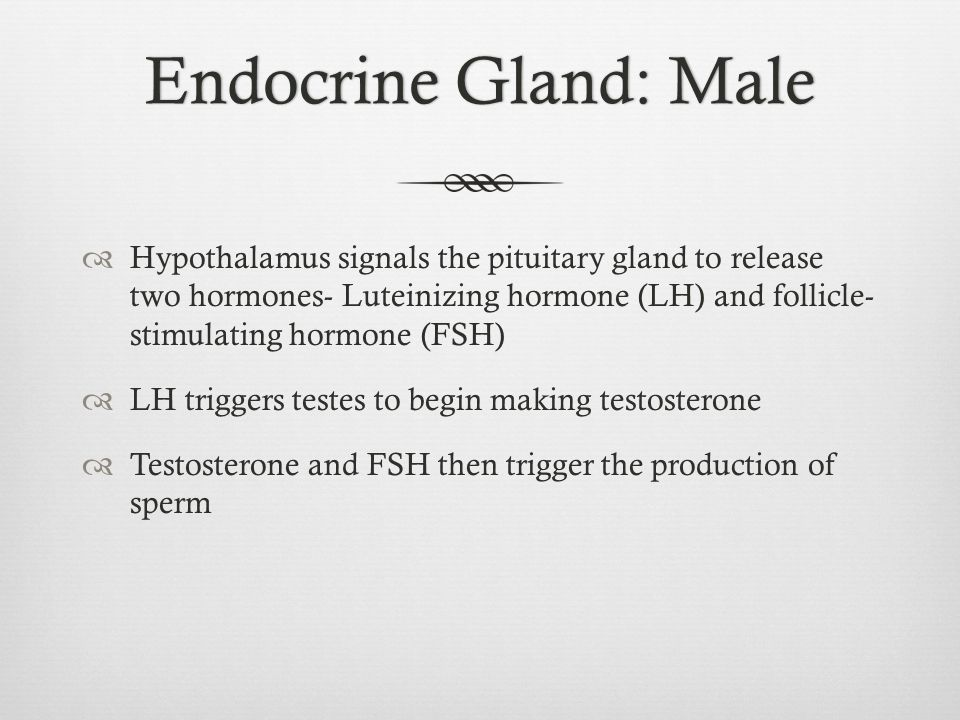 Endocrine Gland: Male