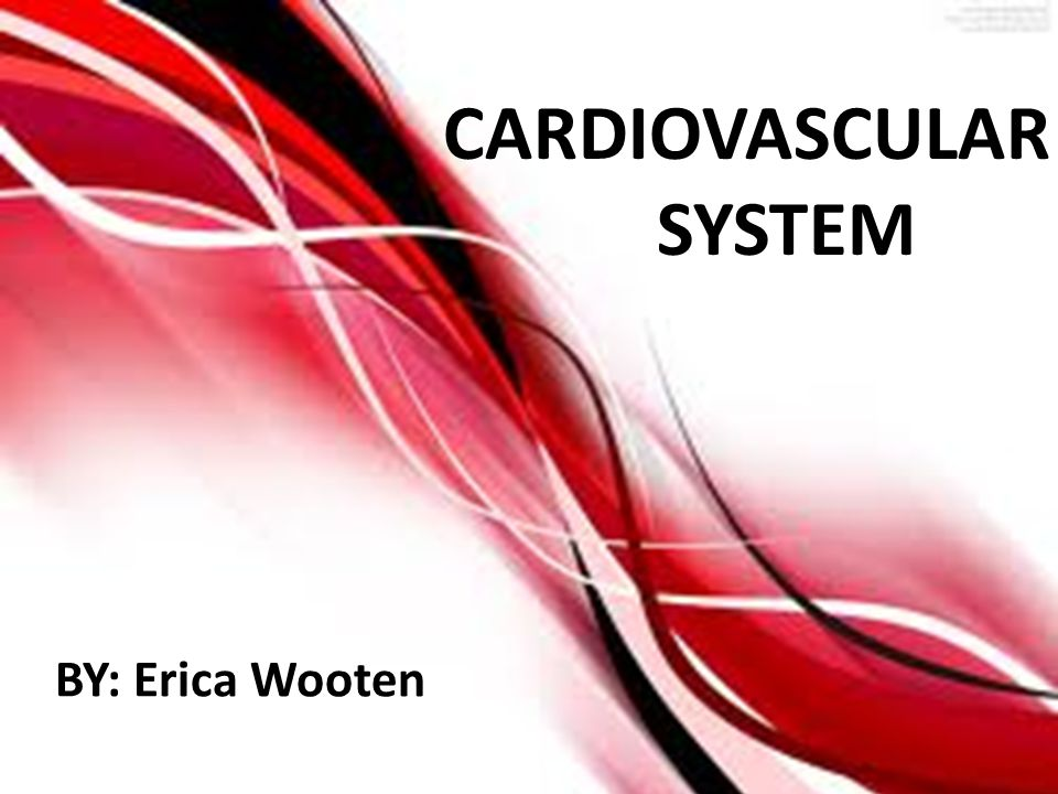 CARDIOVASCULAR SYSTEM BY: Erica Wooten