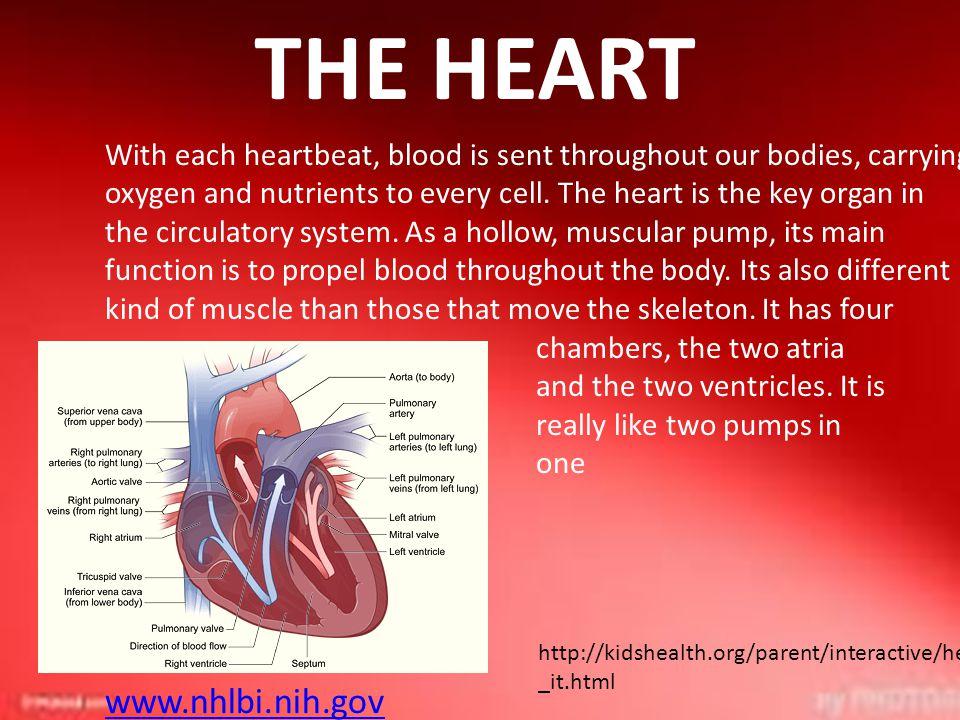 THE HEART www.nhlbi.nih.gov