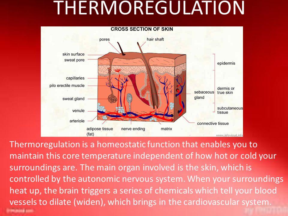 THERMOREGULATION