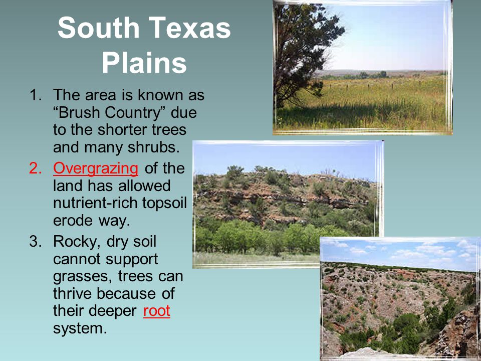 South Texas Plains The area is known as Brush Country due to the shorter trees and many shrubs.