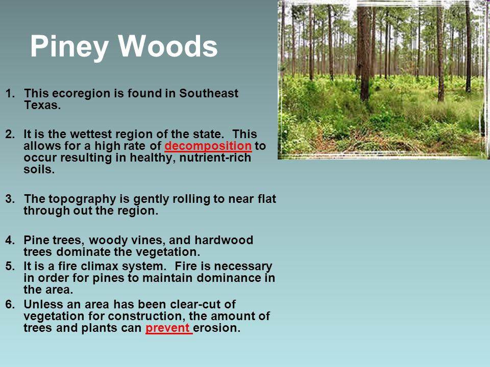 Piney Woods This ecoregion is found in Southeast Texas.