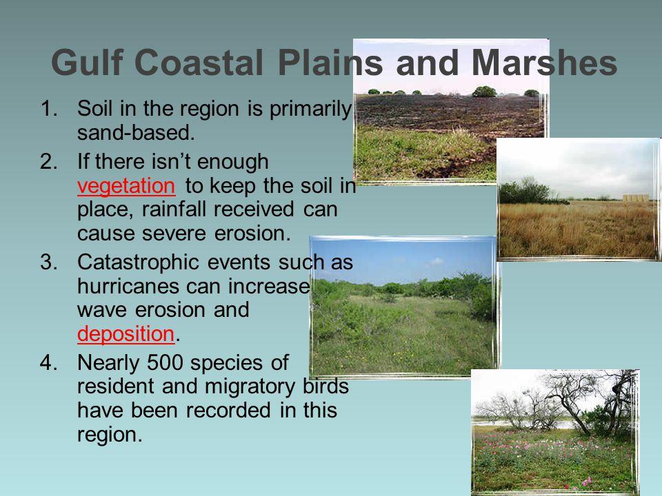 Gulf Coastal Plains and Marshes