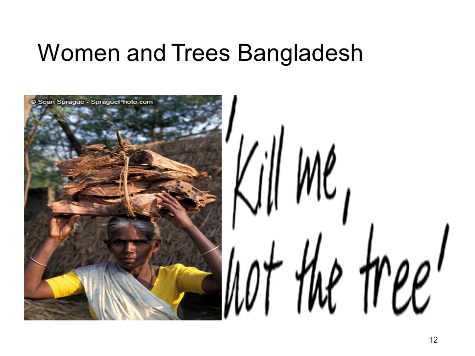 Women and Trees Bangladesh