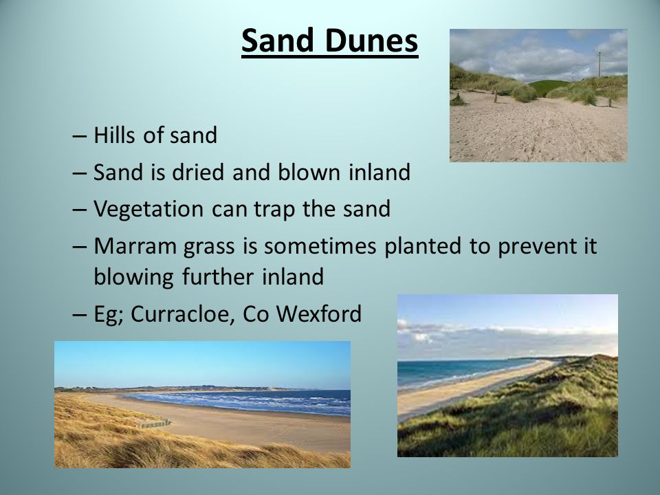 Sand Dunes Hills of sand Sand is dried and blown inland