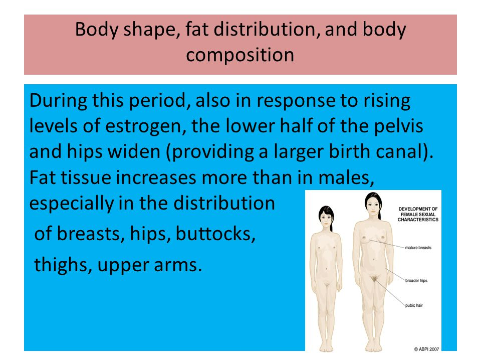 Body shape, fat distribution, and body composition