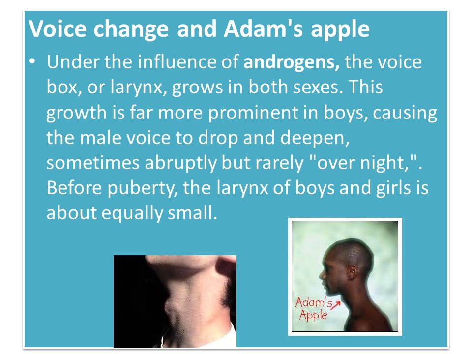 Voice change and Adam s apple