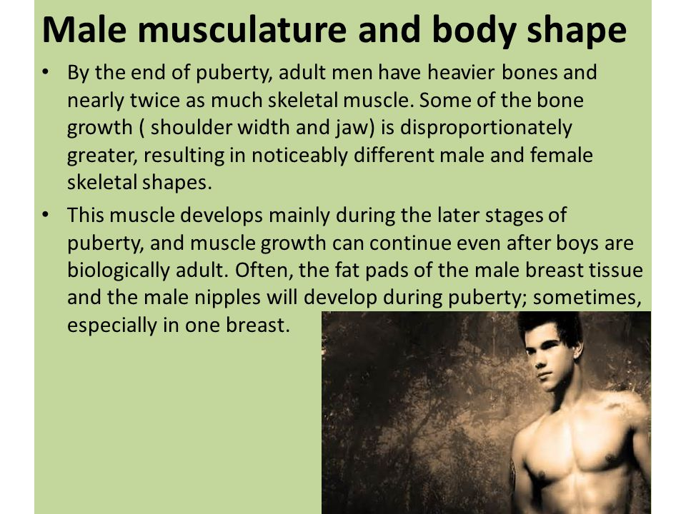 Male musculature and body shape