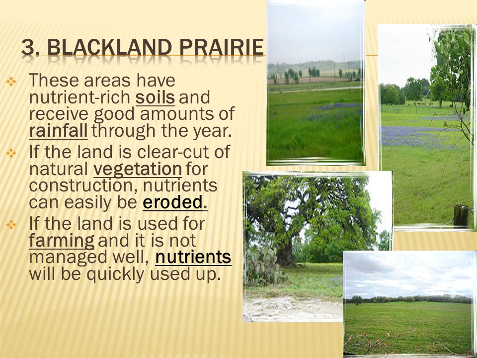 3. Blackland Prairie These areas have nutrient-rich soils and receive good amounts of rainfall through the year.