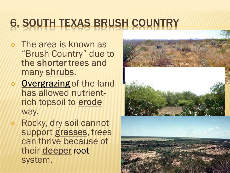 6. South texas Brush Country