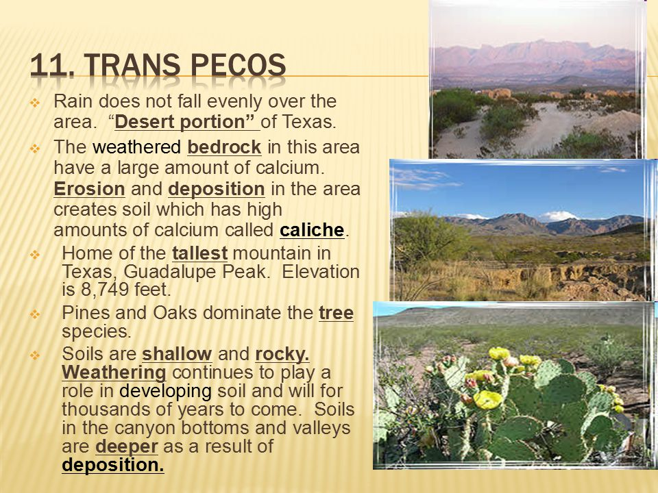 11. Trans Pecos Rain does not fall evenly over the area. Desert portion of Texas.