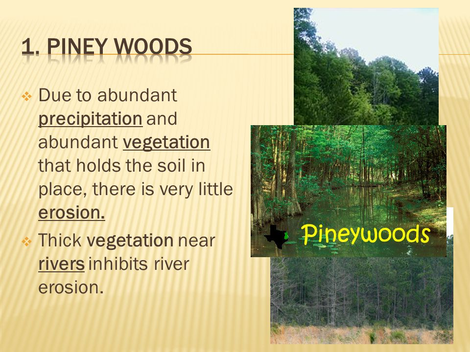 1. Piney Woods Due to abundant precipitation and abundant vegetation that holds the soil in place, there is very little erosion.