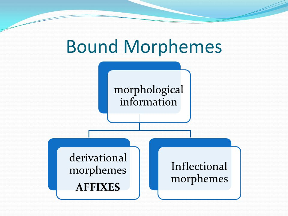 Bound Morphemes morphological information derivational morphemes