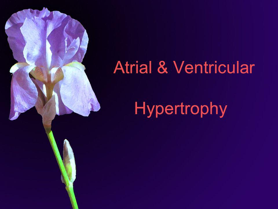 Atrial & Ventricular Hypertrophy