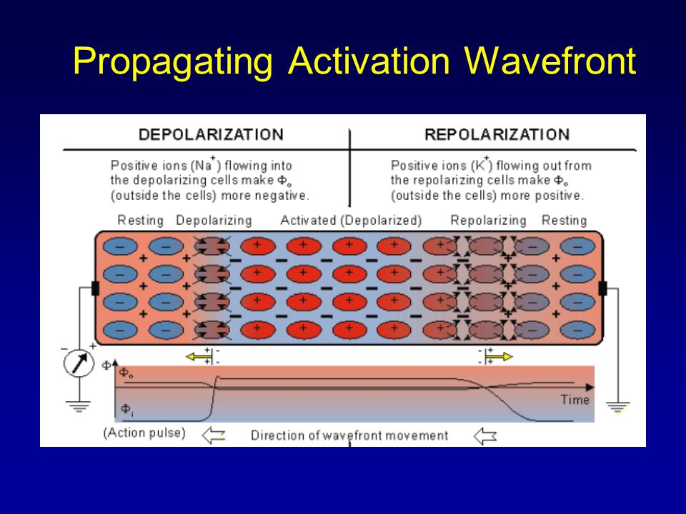 Propagating Activation Wavefront