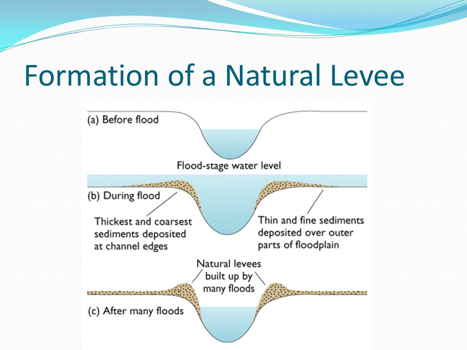 Formation of a Natural Levee