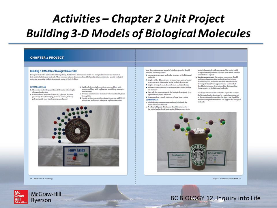 Activities – Chapter 2 Unit Project Building 3-D Models of Biological Molecules