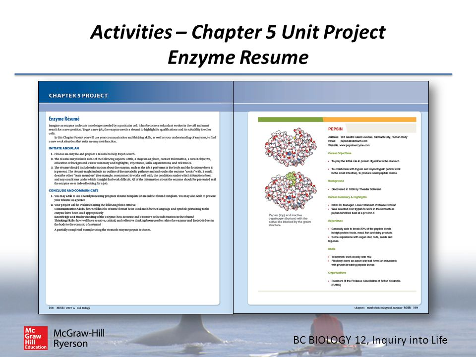 Activities – Chapter 5 Unit Project Enzyme Resume