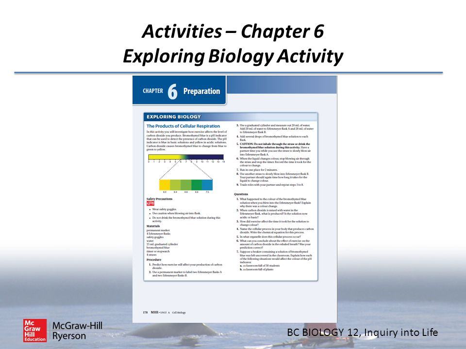 Activities – Chapter 6 Exploring Biology Activity